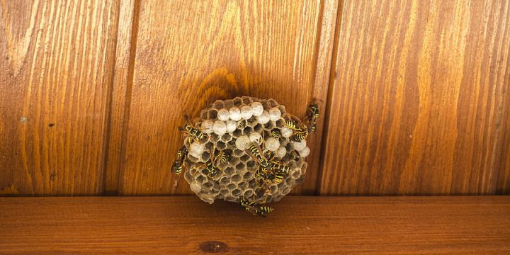 4 Advantages of Hiring A Trained Wasp Exterminator